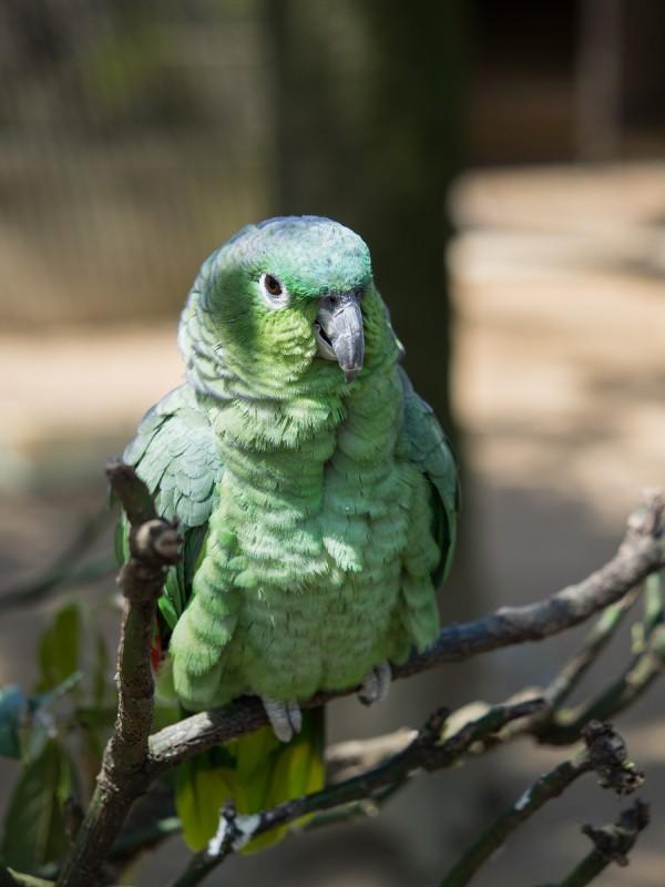 綺麗な緑色のインコ