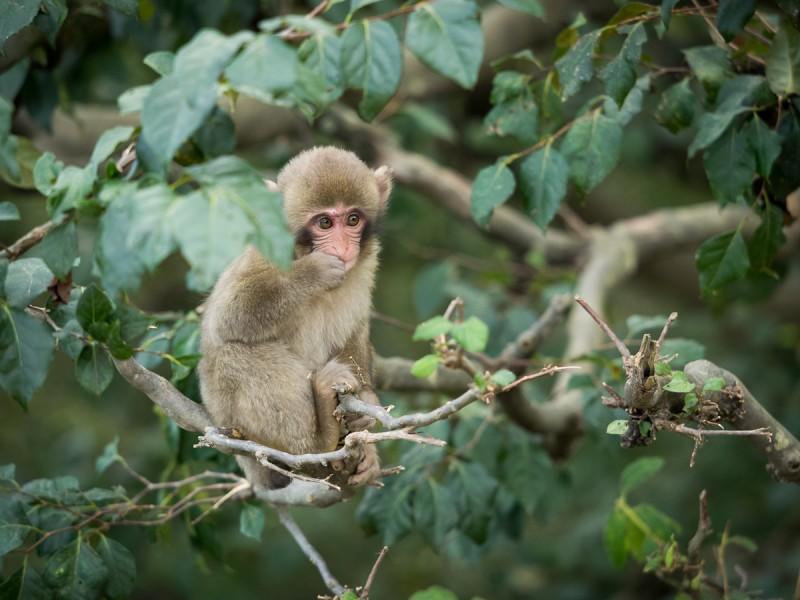 木の上の子猿
