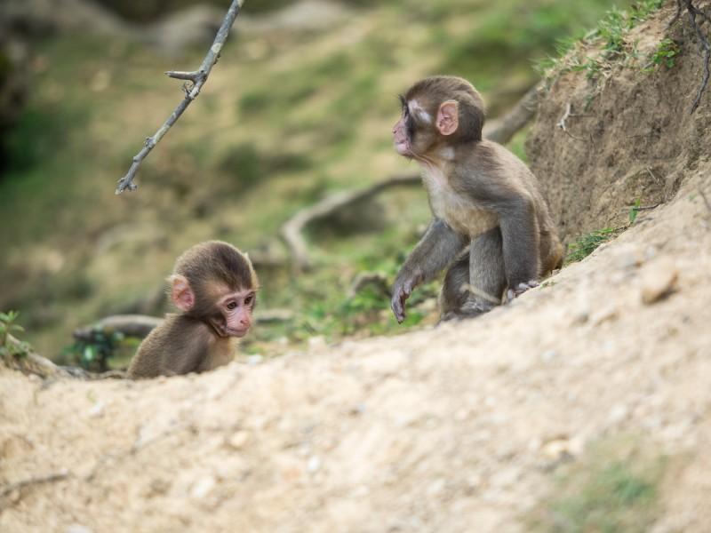 2頭の子猿