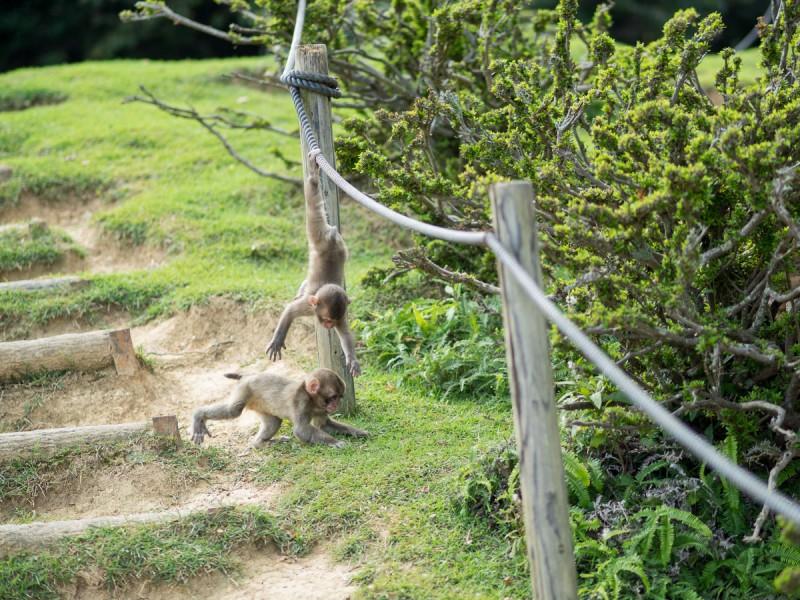 ロープで遊んでいる2頭の子猿