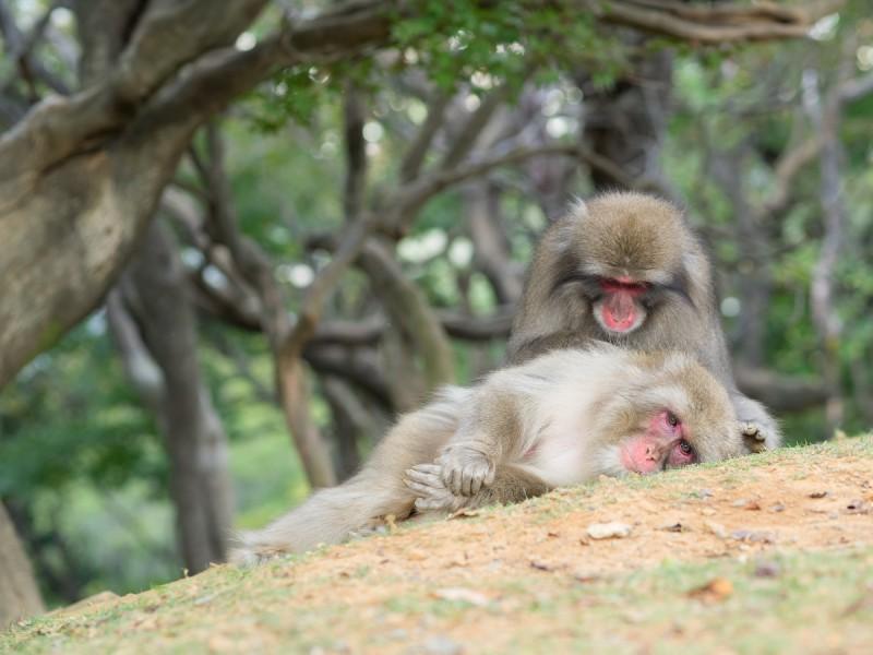 毛繕い中の2頭のお猿