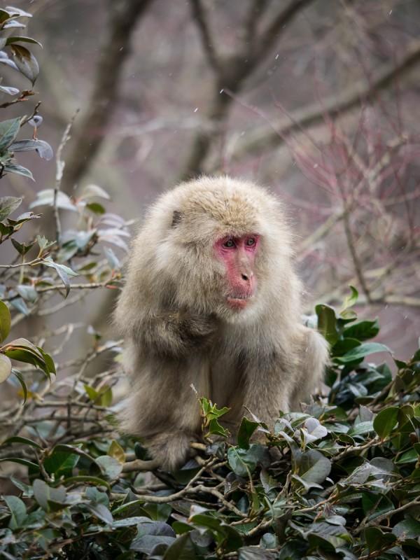 寒さに震えるお猿