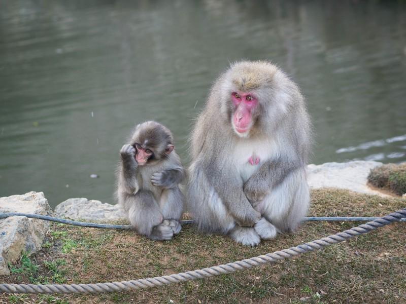 お猿の親子