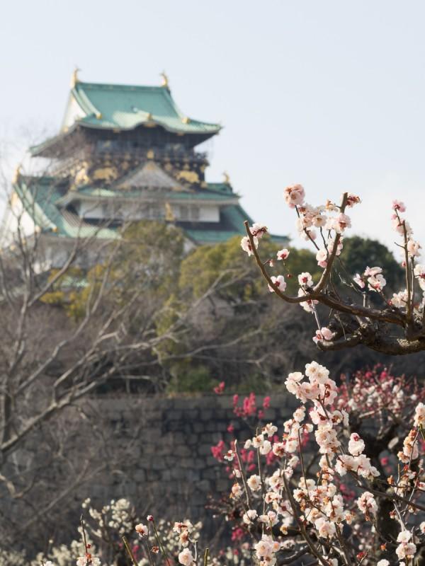 大阪城と梅の花