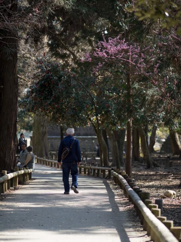 奈良公園を歩く男性