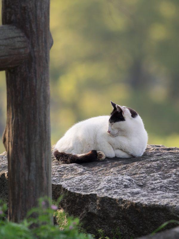 寝てる野良猫