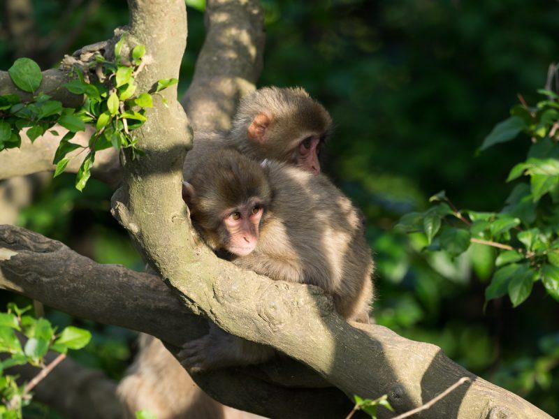 木の上にいる2頭の子猿