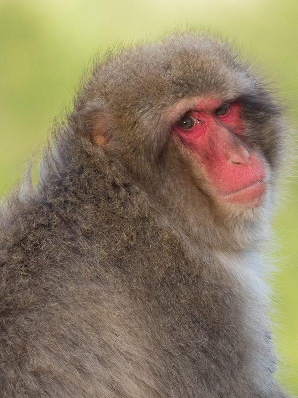 お猿のドアップ