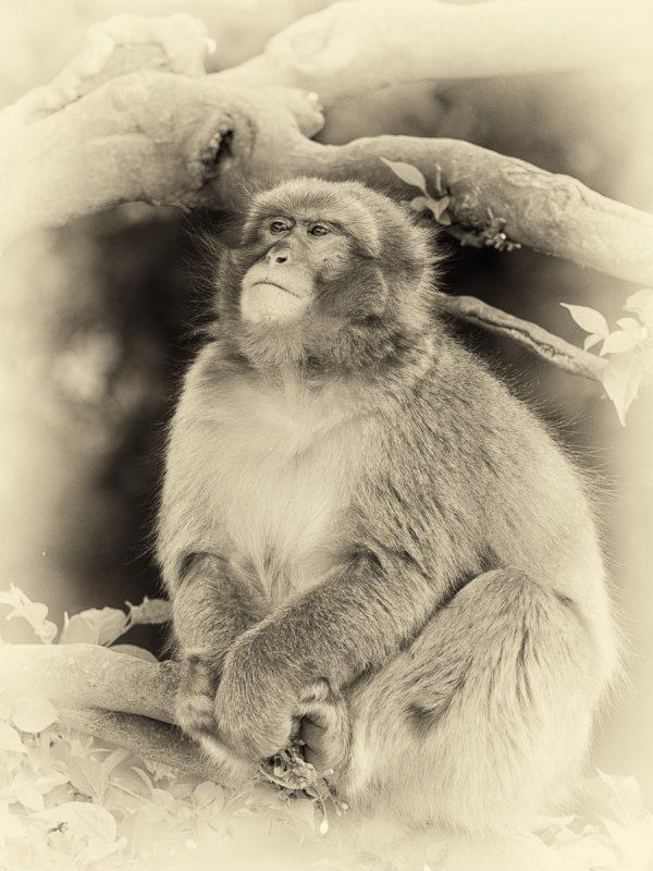 木の上で佇むお猿