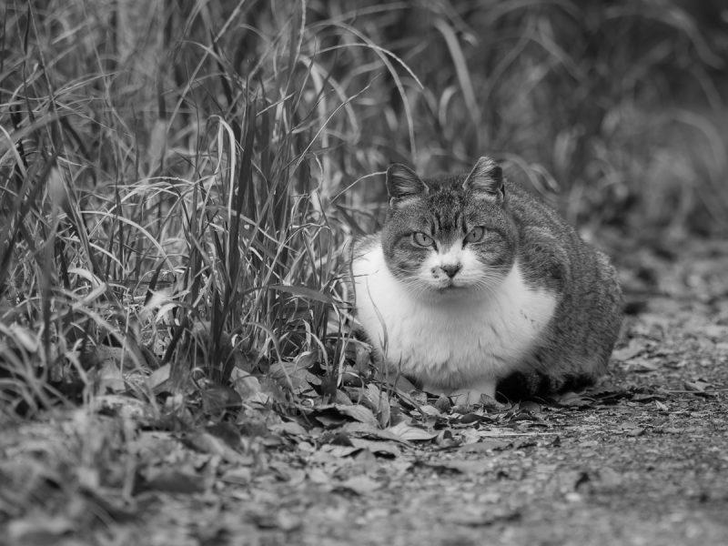 大阪城公園の野良猫