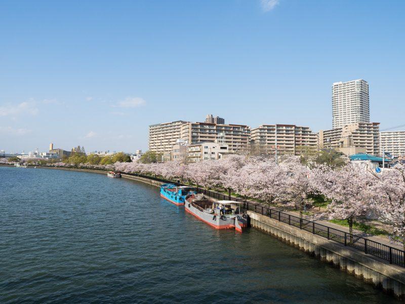 大川と桜並木
