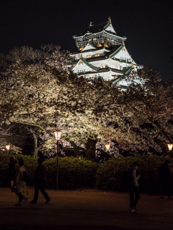 大阪城西の丸庭園の夜桜