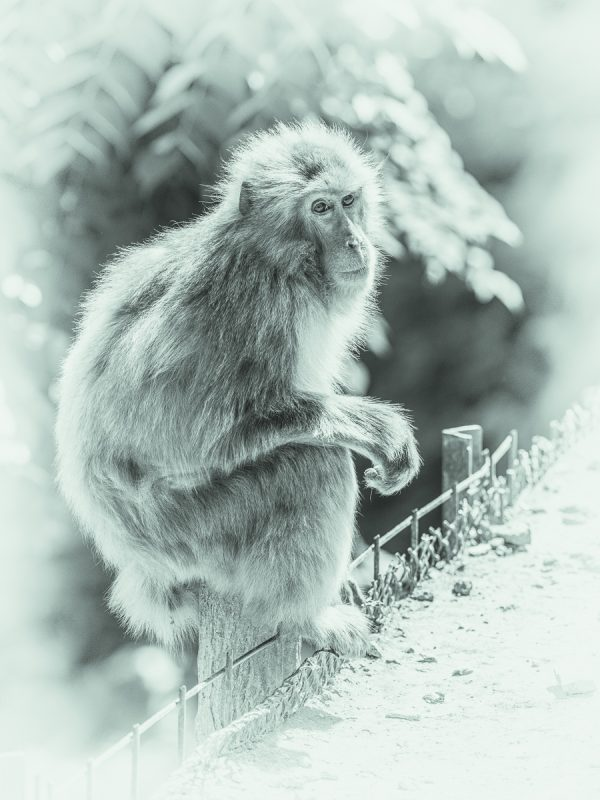 嵐山モンキーパークのお猿