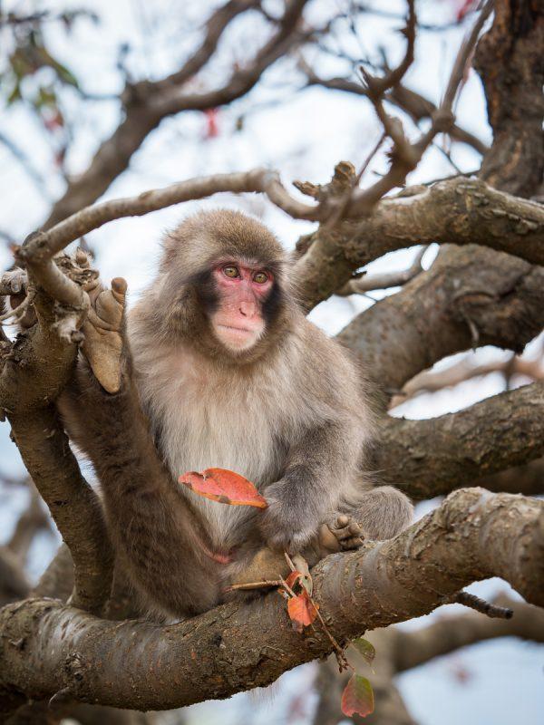 木の上で葉っぱを手に持ったお猿