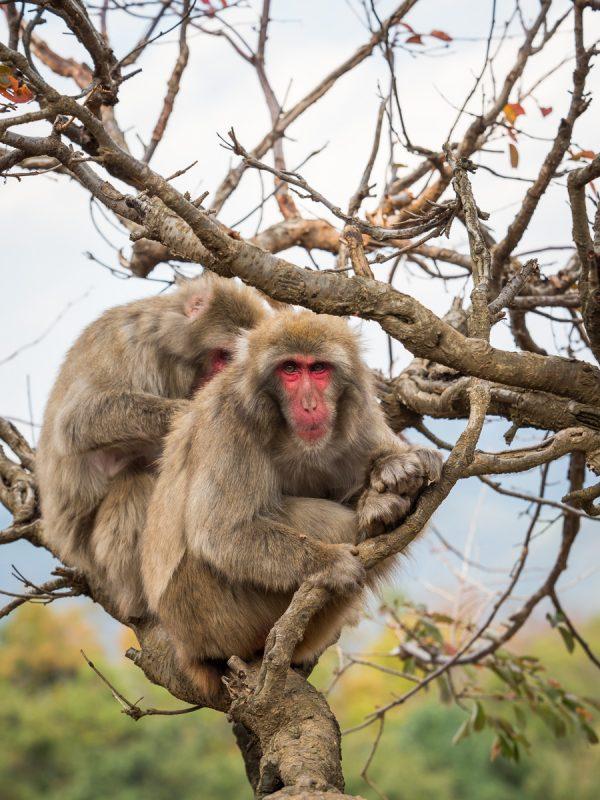 木の上で毛繕い中の2頭のお猿