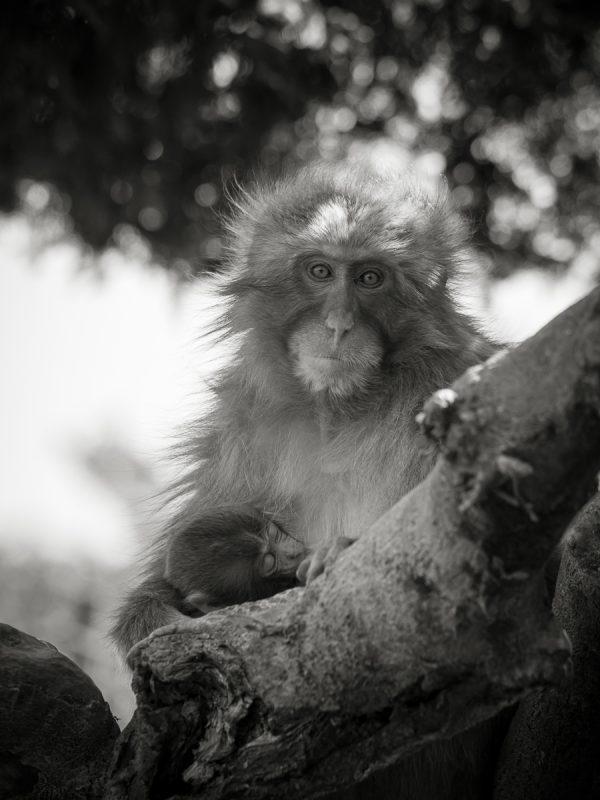嵐山のお猿の親子