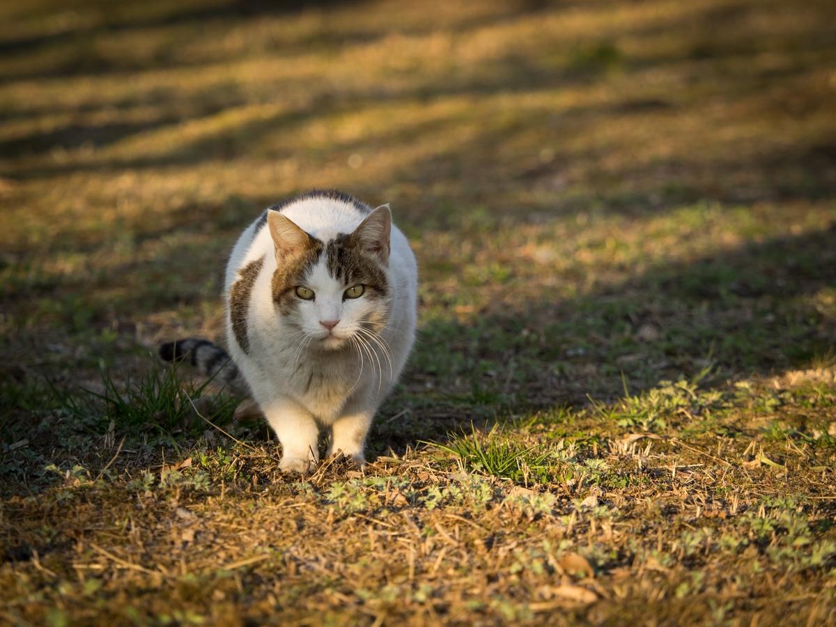 こちらをじっと見つめる野良猫
