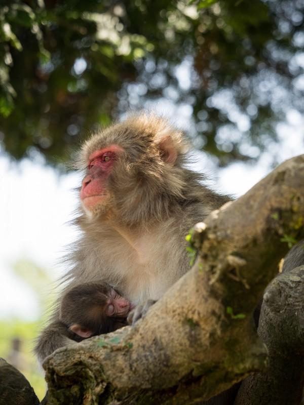 木の上で赤ちゃんを抱いているお猿のお母さん