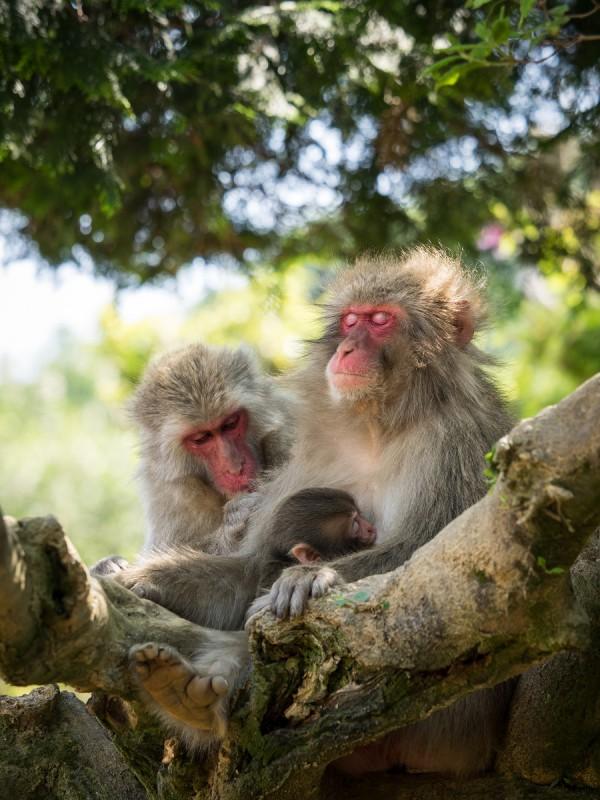 木の上のお猿の家族