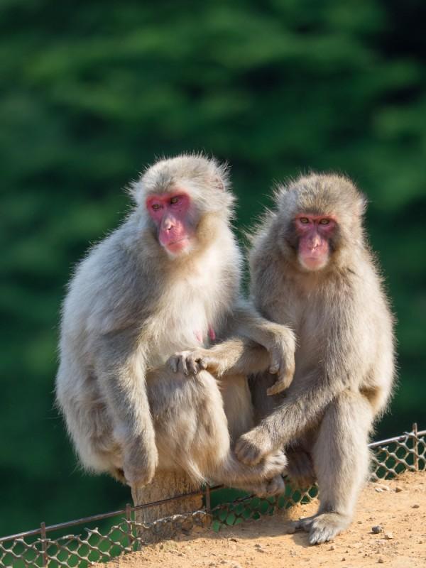 仲良しの2頭のお猿