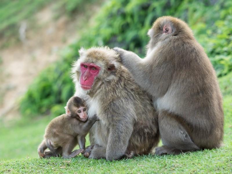 お猿の家族