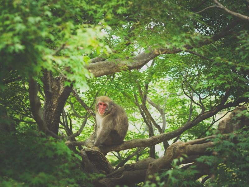 木の上にいるお猿