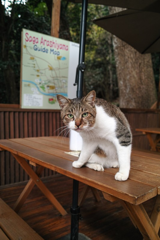 嵐山モンキーパーク入り口にいた猫
