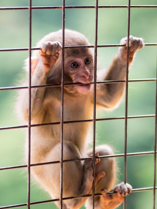 金網に必死につかまる子猿