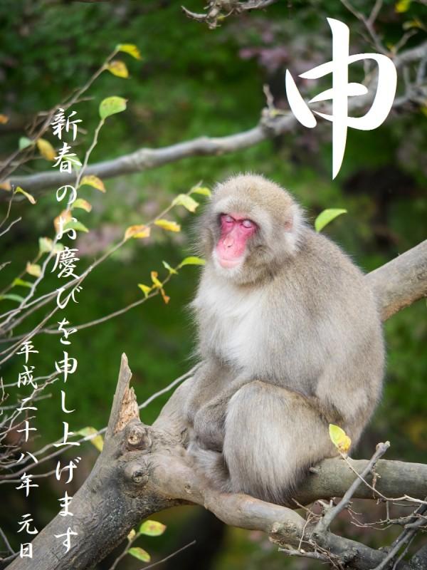 木の上でくつろぐお猿