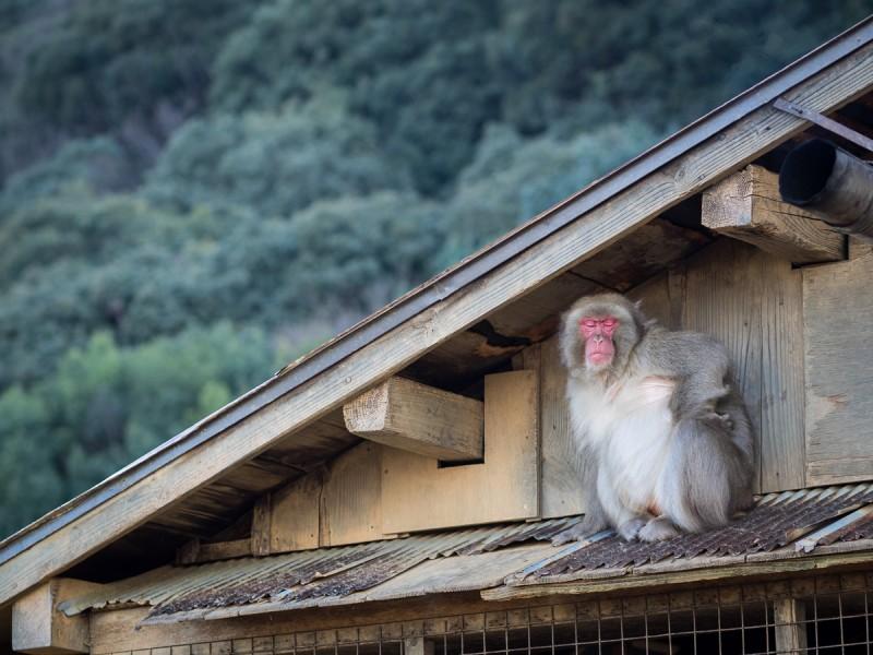 くつろぐお猿