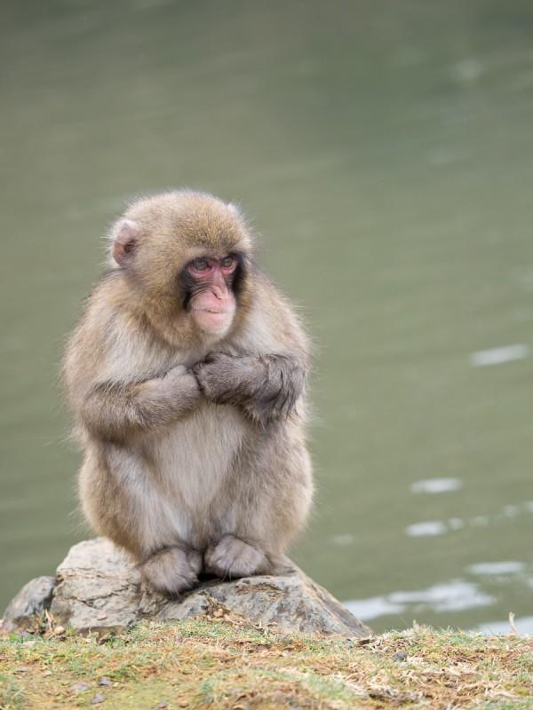 寒さに震える子猿