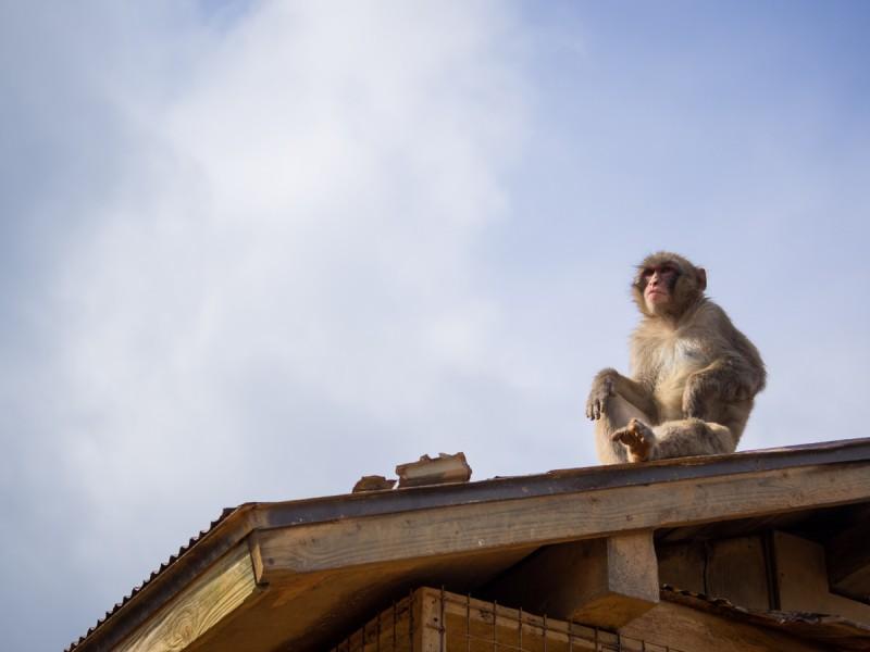 屋根の上のお猿