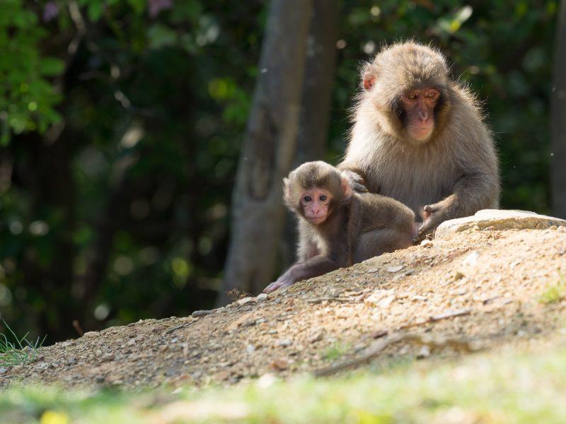 2頭のお猿