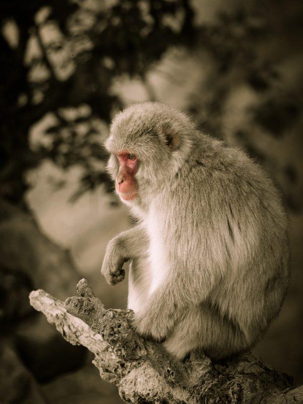 木の上のお猿