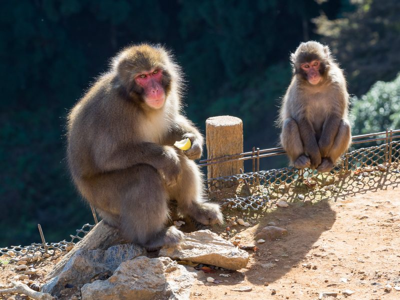 嵐山のお猿