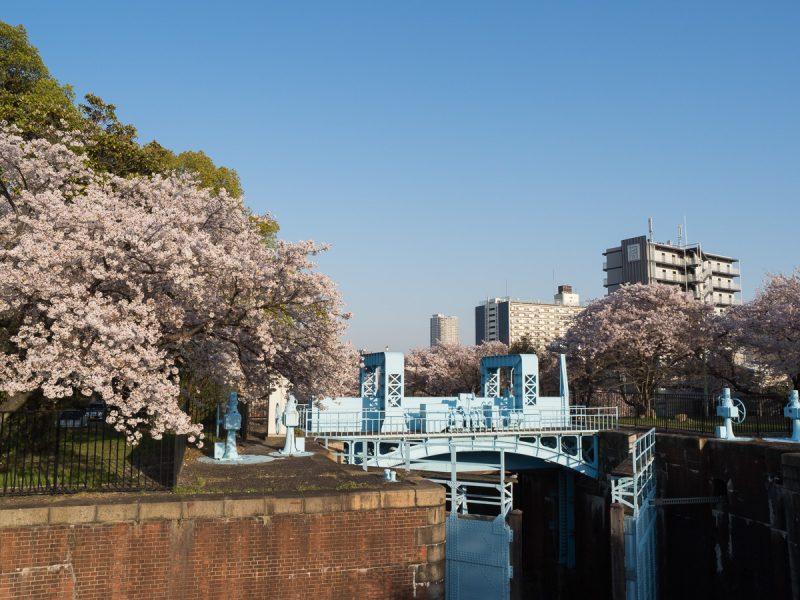 毛馬第一閘門と桜