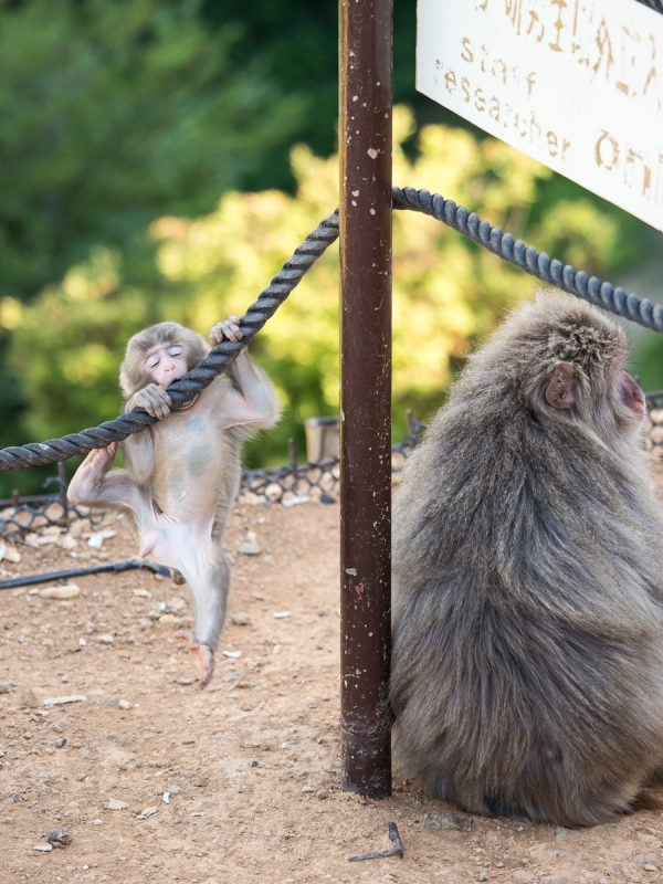 背中を向けて座っている母猿とロープにしがみついている子猿