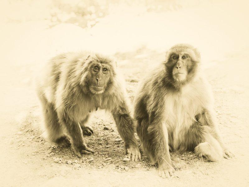 嵐山モンキーパークの2頭のお猿