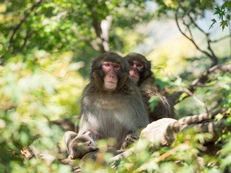木の上の2頭のお猿