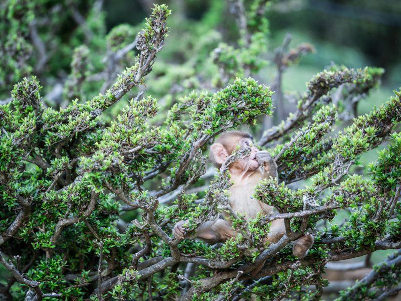 草木に囲まれてくつろぐ子猿