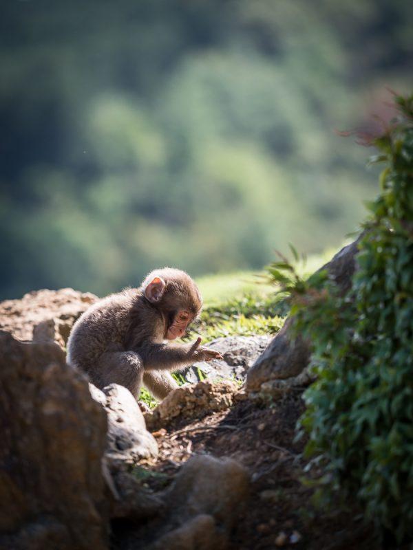 手のひらを見る子猿