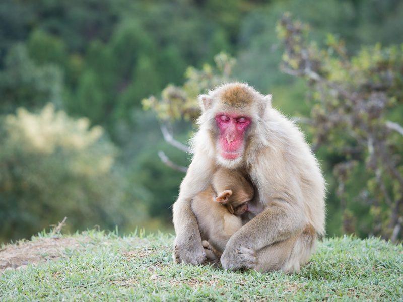 寝ているお猿の親子