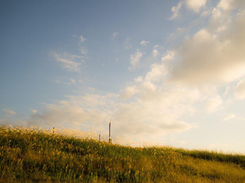 土手に生えるセイタカアワダチソウと夕暮れの空