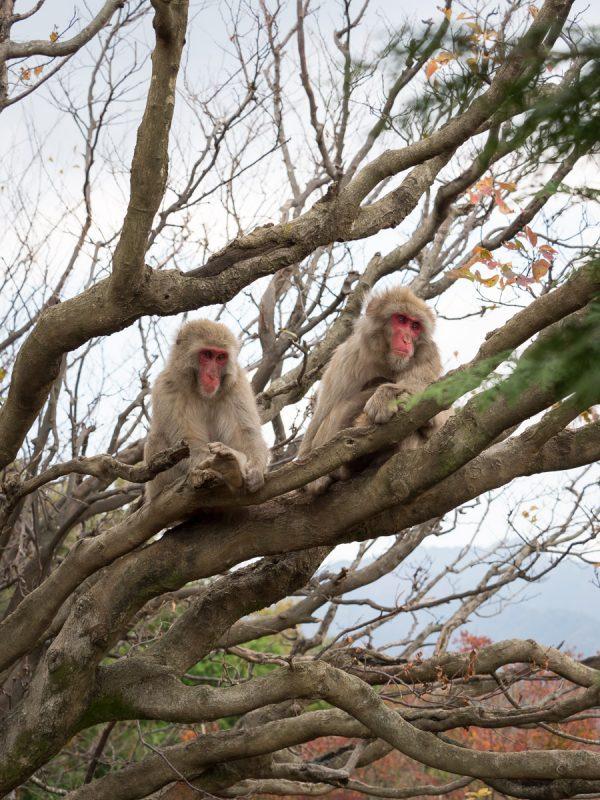 木の上にいる2頭の猿