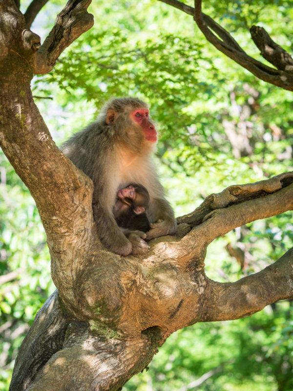 木の上でくつろぐお猿の親子
