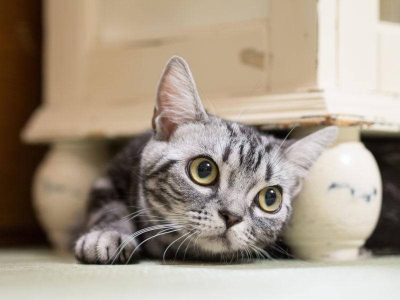 ひよっこり顔を出す子猫