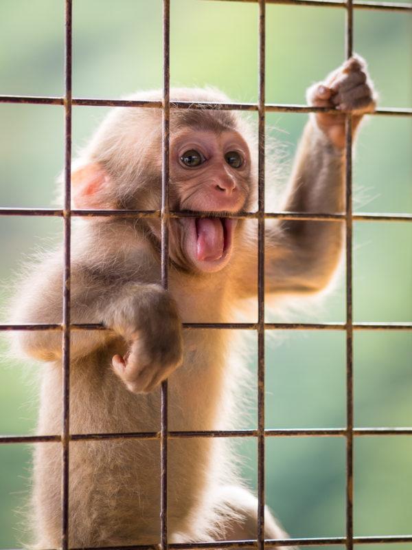 餌を待つ子猿